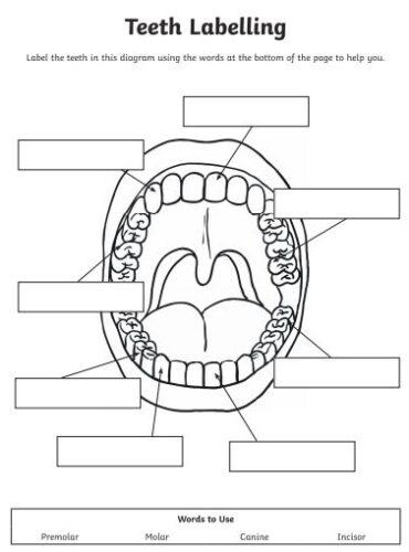Teeth labelling